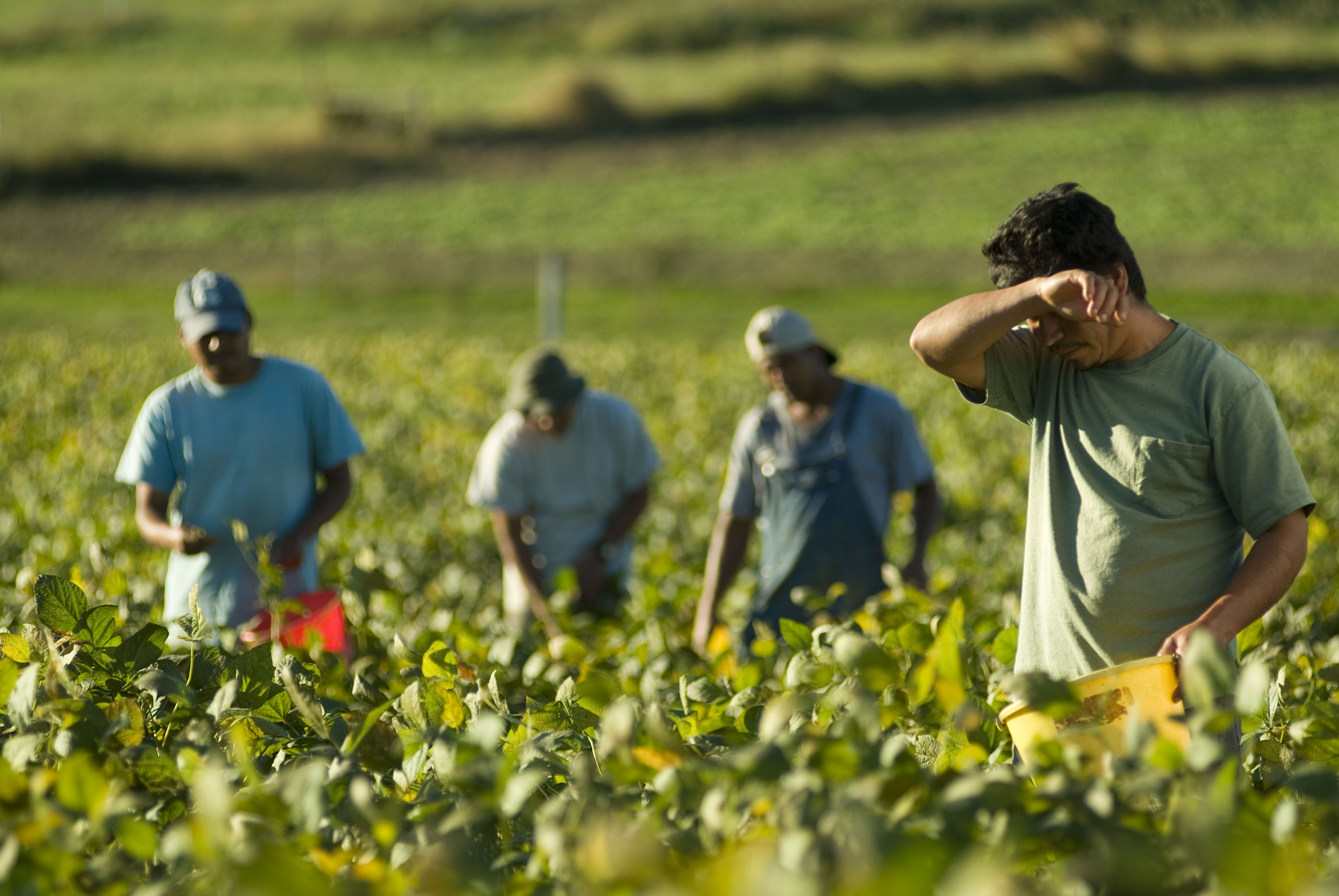 Labor Trafficking in Agriculture
